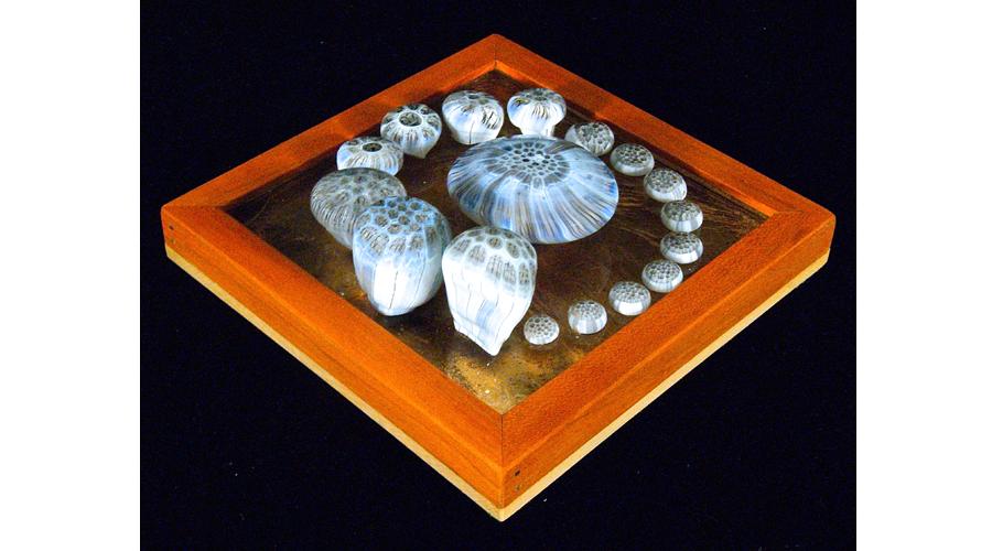 Mycomultarum Spiralus